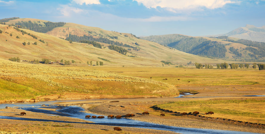 Lamar Valley in Yellowstone National Park